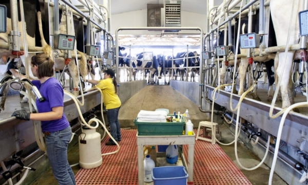 file photo from Stateland Dairy at Meadowbrook Farm